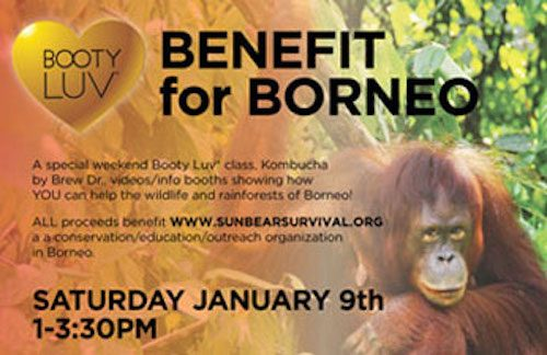 benefits-for-borneo